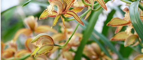 Lotus Leaves for Healing Energy